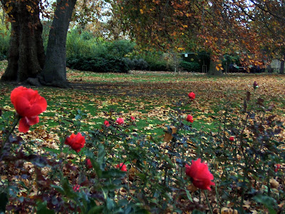 Svetlana Allikas roses