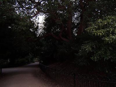 Svetlana Allikas Strawberry tree