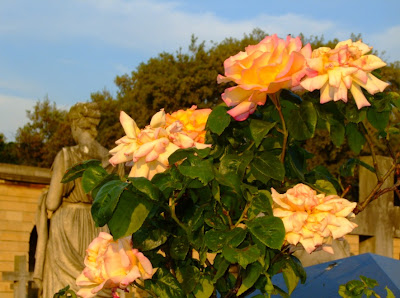 Светлана Алликас розы на старом кладбище