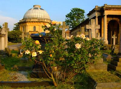 Svetlana Алликас розовый куст на старом кладбище