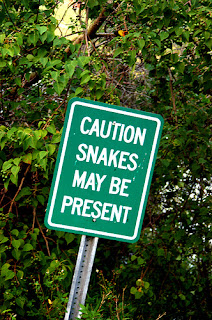 Snakes Spotted Ahead!