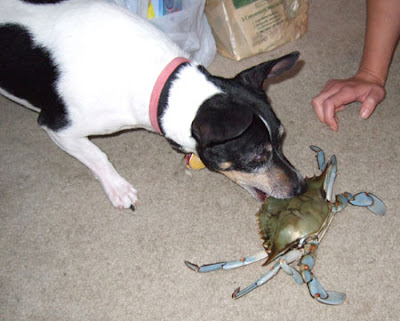Buddy trying to steal my crab.