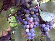 En Winery85, tu bodega virtual