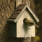 Uma casinha de passarinho por dentro
