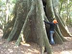 Árbol que impide ver el bosque
