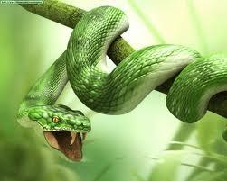 serpientes Las serpientes son sordas