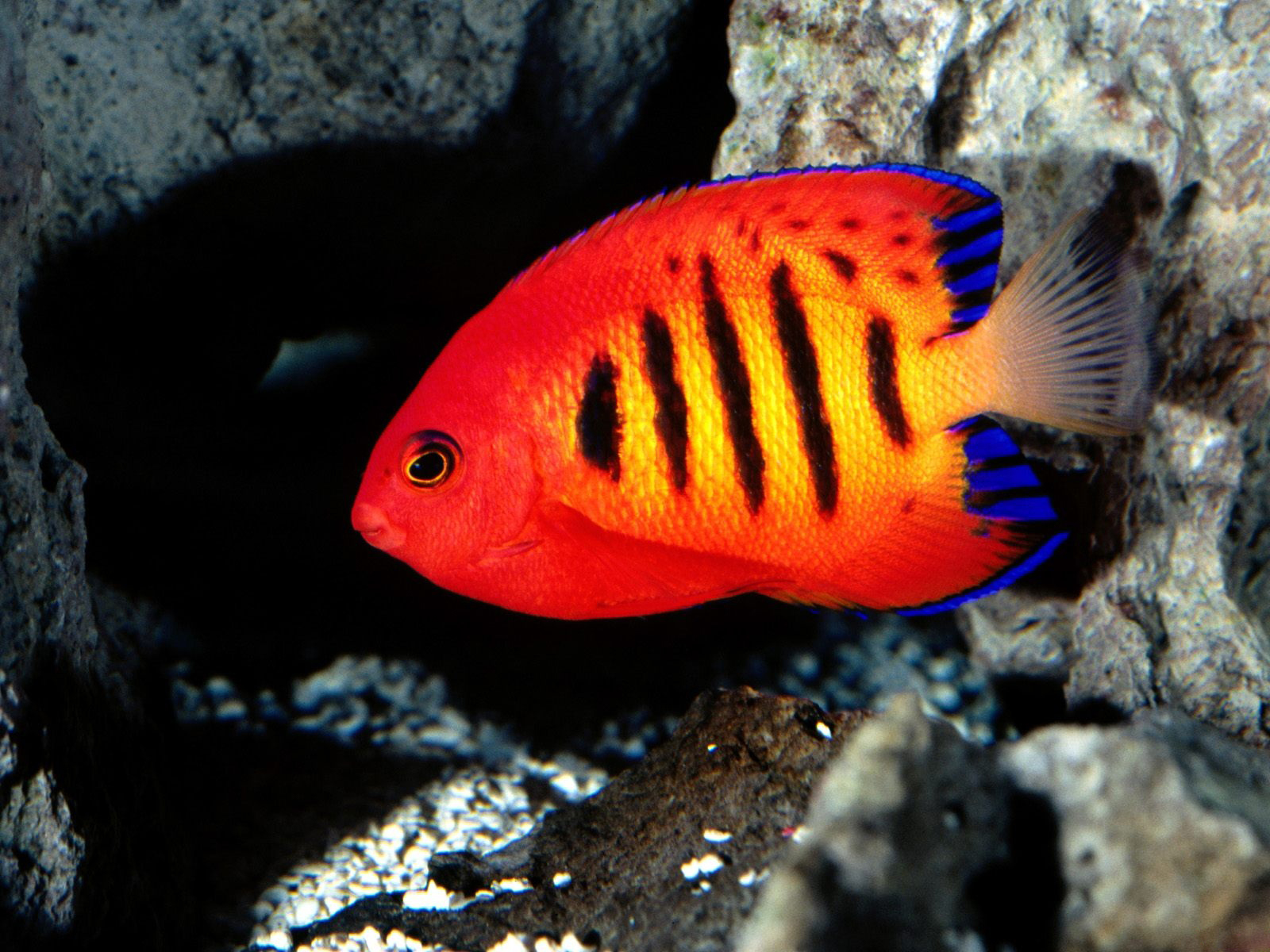 Best Wallpapers: Colorful Fish Wallpapers