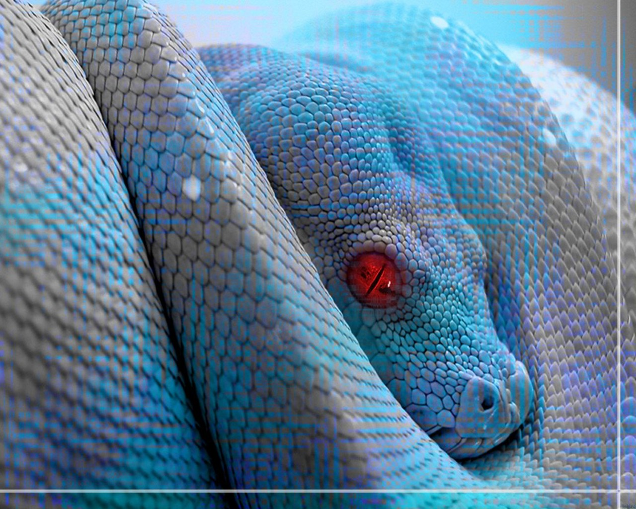 HD Animal Wallpapers: HD Reptile Wallpapers - photo#32