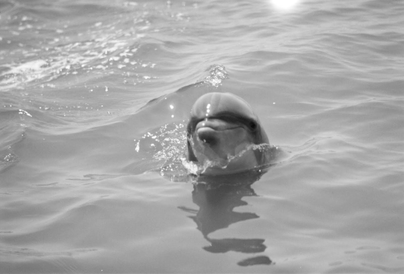 My Beautiful Picutre Album: Dolphins' Cute Faces