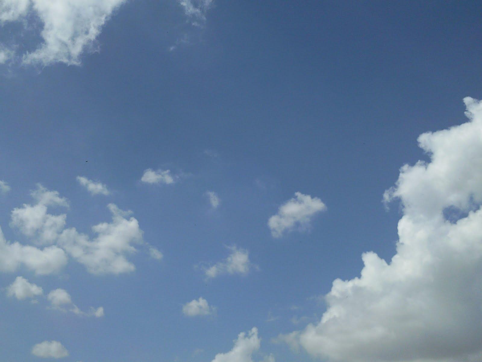 My Beautiful Picutre Album: single bird in clear sky