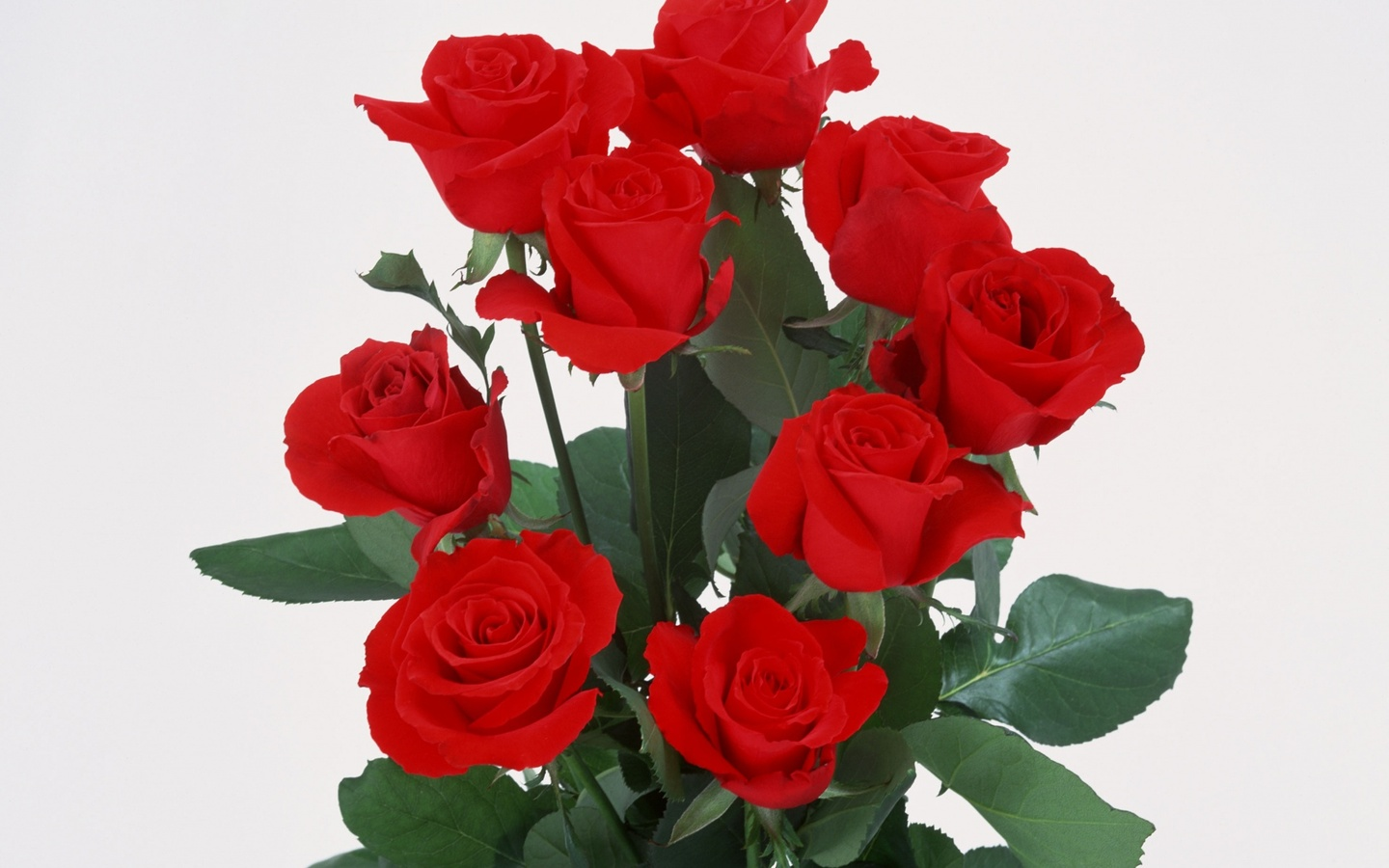 My Beautiful Picutre Album: Bunch Of Fully Bloom Red Roses