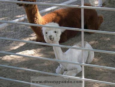 http://bp3.blogger.com/_sdOo-3UKJnk/Rz1TKRiv0vI/AAAAAAAAA6A/qJxZ7FwRbXQ/s400/www.dhumayadda.com_21.jpg