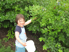 Picking Indiana Blueberries