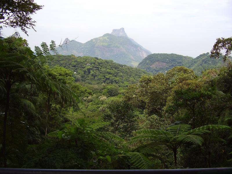 Flora do Parque Nacional da Tijuca