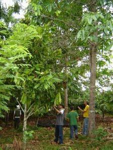 Agroflorestas