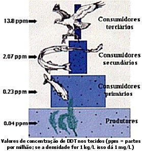 Bioacumulação