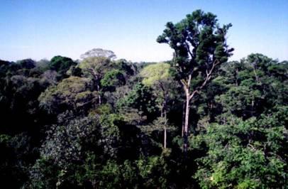Árvores Simbólicas e Tipos de Florestas