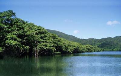 Floresta de Alto Valor de Conservação