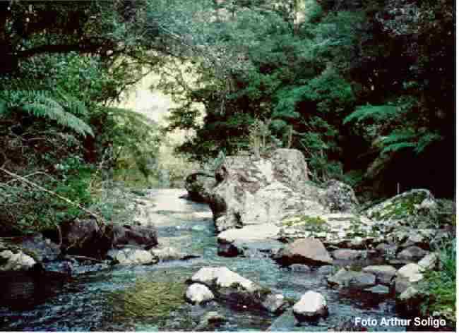 Floresta nacional - FLONA