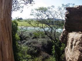 Floresta Estacional-semidecidual