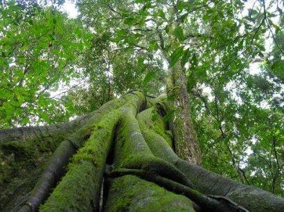 Floresta Primária