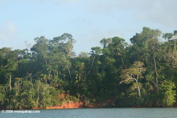 Floresta Secundária