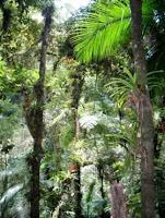 Hot spot de Biodiversidade
