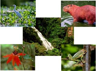 Ecologia, Conceitos básicos de Ecologia