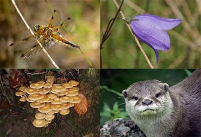 Bioprospecção da Biodiversidade