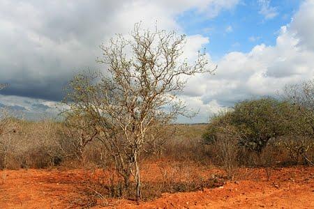 Floresta Nacional de Cristópolis | Bahia