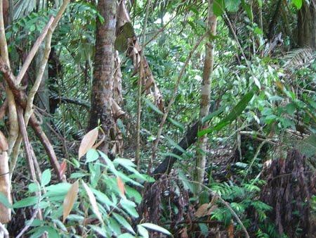Floresta Nacional de Mulata | Pará
