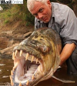 Peixe Tigre é Capturado na África