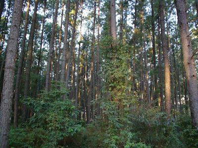Floresta Estadual de Batatais
