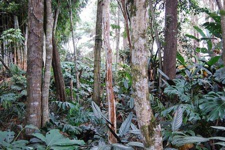 Estação Ecológica do Cuniã | Rondônia