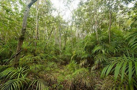 Floresta de Igapó