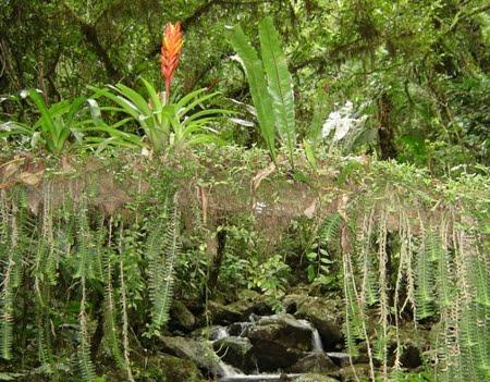Área de Proteção Ambiental da Bacia do Rio São João | Rio de Janeiro