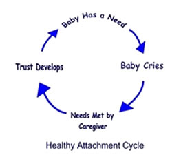 attachment cycle diagram john bowlby attachment theory diagram