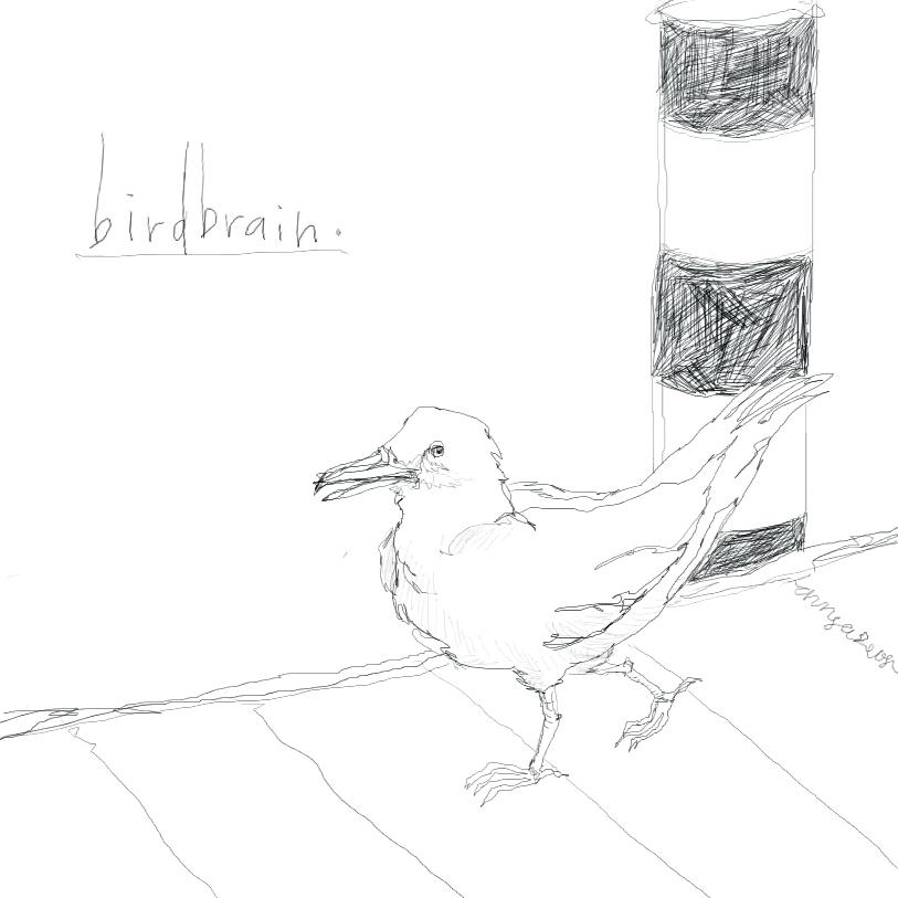 [Birdbrain]