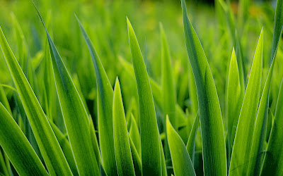 Green Desktop Wallpaper on Best Free Desktop Wallpapers  Beautiful Green Grass Desktop Wallpaper