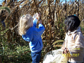 Picking Indian Corn