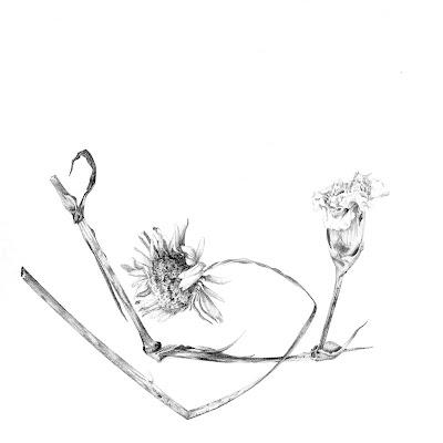 Melanie Perkins Dead Flowers Botanical Drawing