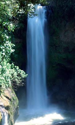 la paz waterfall garden in costa rica