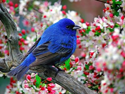 أيها الطير خذني BlueBird.jpg