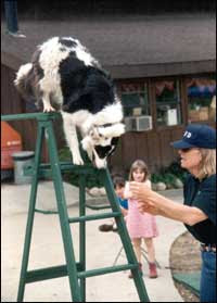 Deresa Teller helps Bella shows dexterity on a ladder