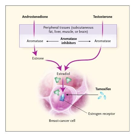 Zoladex and breast cancer