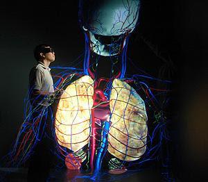 Cuerpo humano en cuatro dimensiones 4d
