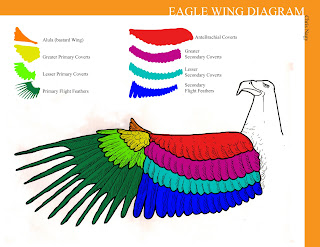 Eagle Wing Diagram 92 Jeep Wrangler Fuse Box Chris Nagy Illustrator Sunday January 31 2010 Fresh From Adobe