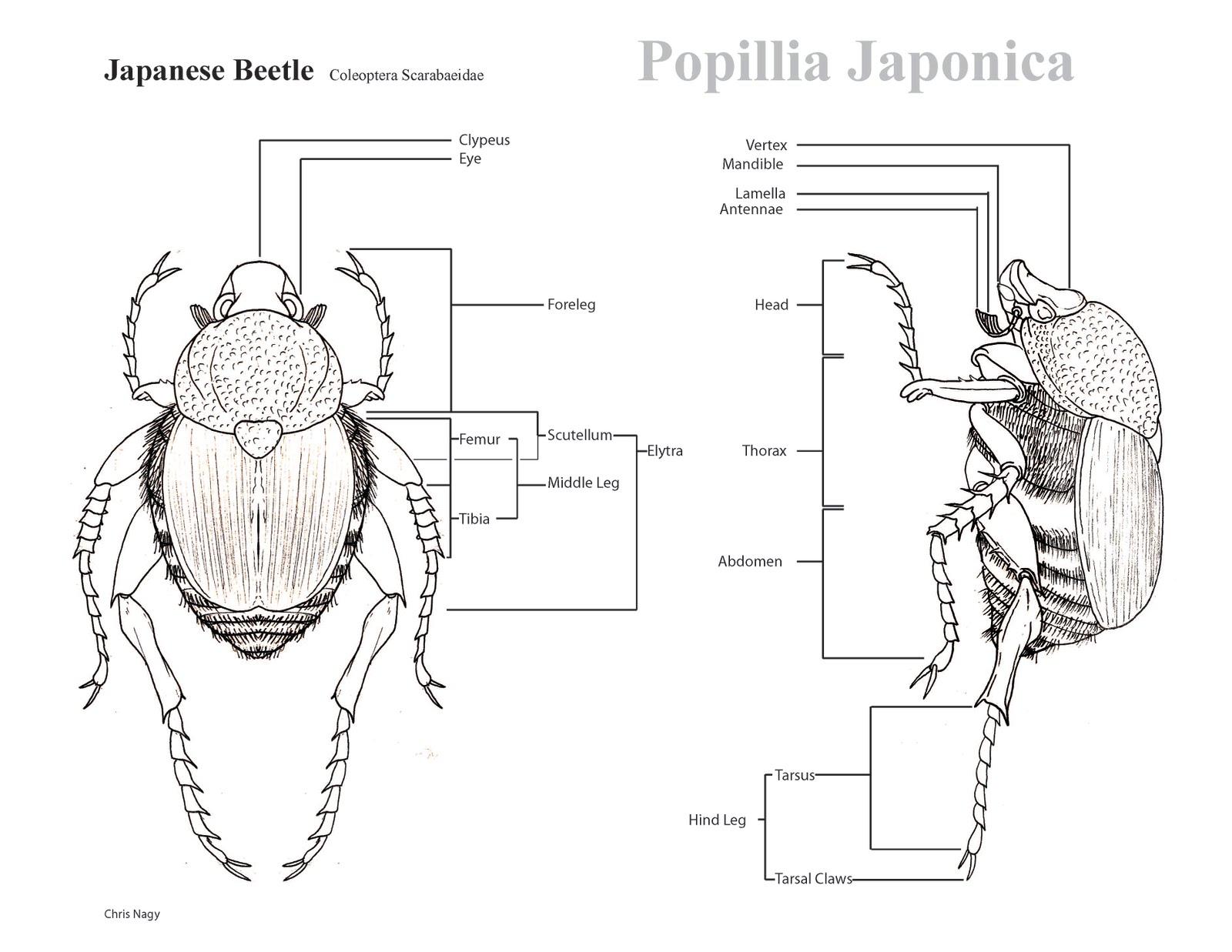 Chris Nagy Illustrator Bug Illustration