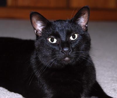 My cat Simon