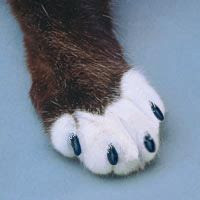 photo of softpaws on cat